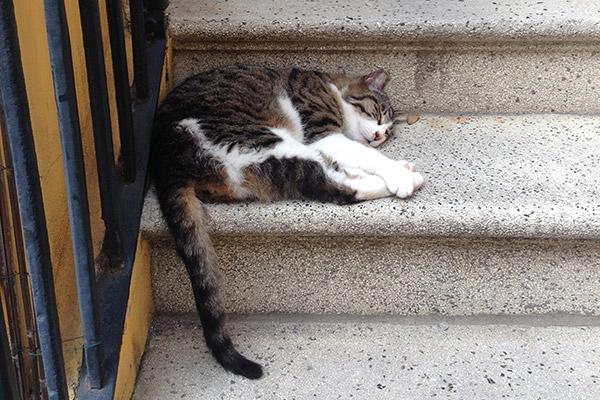 stair cat venice italy